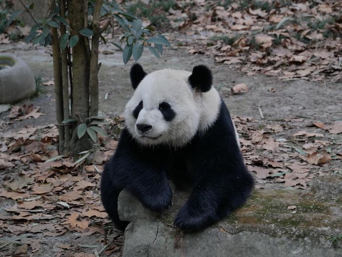 Quoi visiter dans la capitale du Sichuan ?