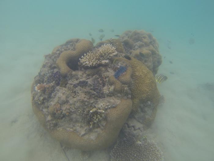 L'un des meilleurs spots de plongée en Malaisie paraît-il !