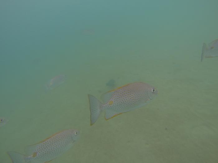 Des poissons de toutes les couleurs malgré le manque de luminosité.
