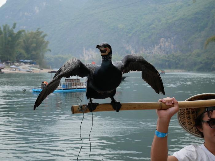Une idée astucieuse pour pêcher !