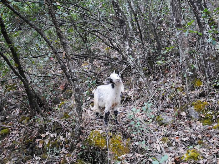 Quels animaux croise-t-on dans les gorges ?