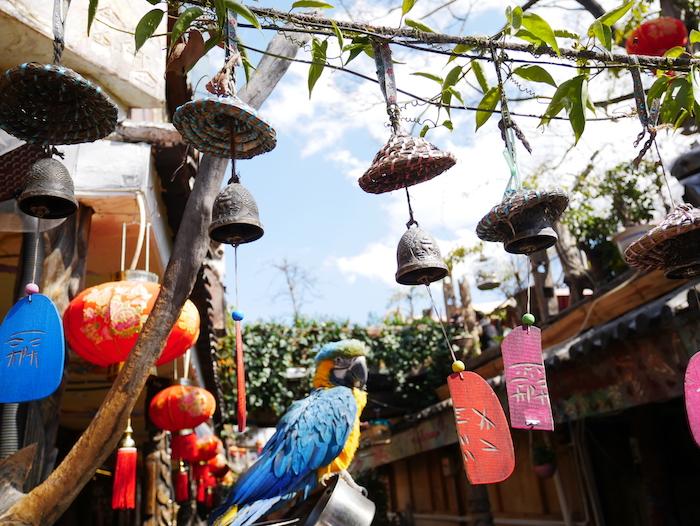 Que faire à Lijiang ?