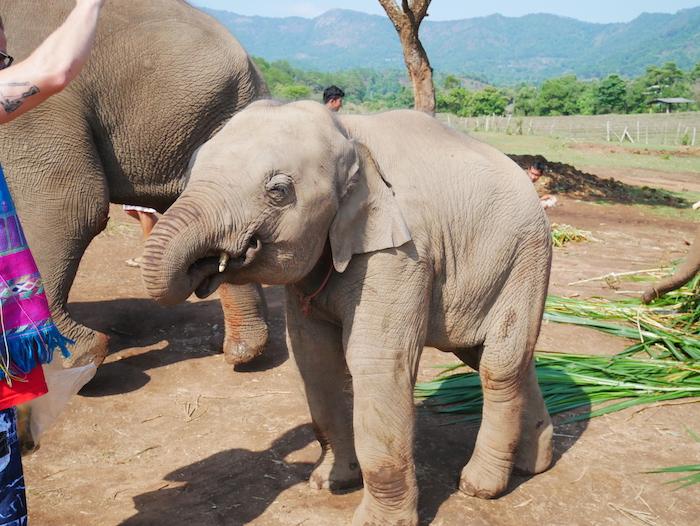 Comment peut-on maltraiter ces animaux magnifiques ?