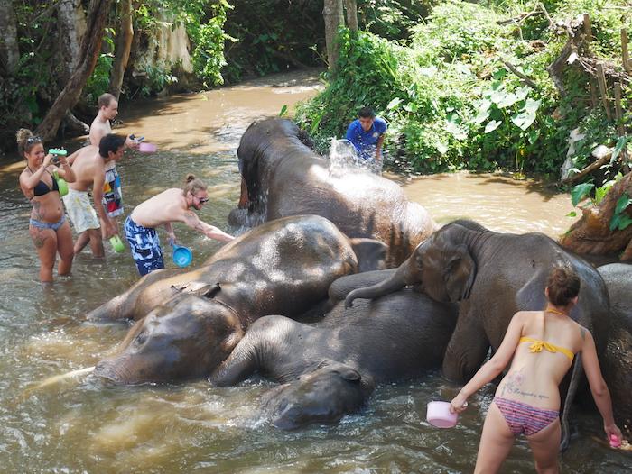 Les éléphants aiment se baigner pour se rafraîchir !