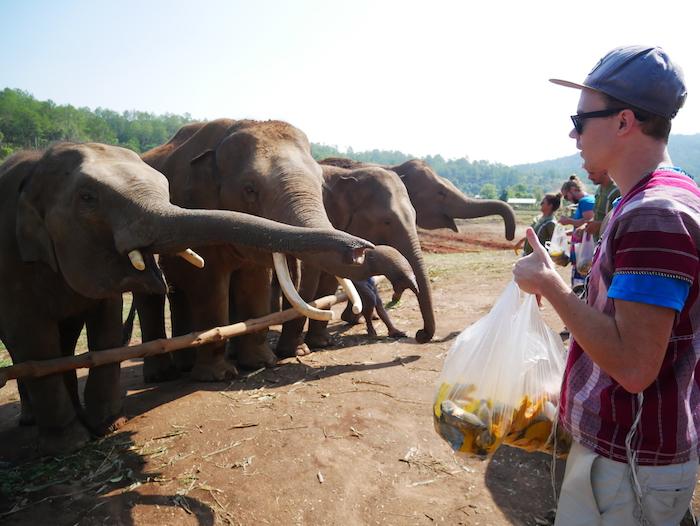 Qu'est-ce qu'un éléphant mange ?