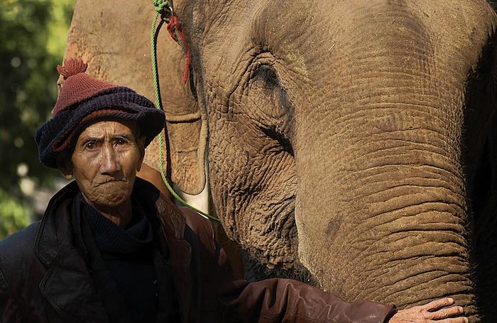 Qu'est-ce qu'un mahout ?