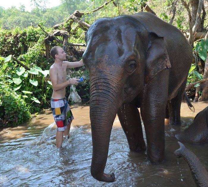Comment laver un éléphant ?