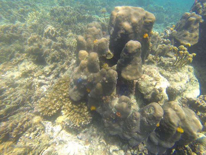 Où faire du snorkelling à Koh Tao ?