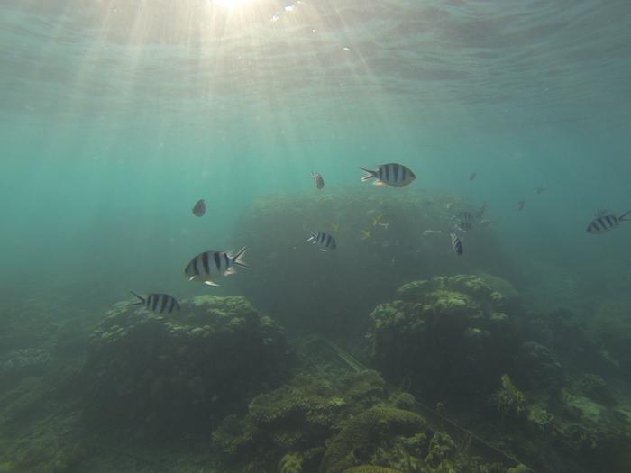 Quelle île de Thaïlande choisir pour faire du snorkelling ?