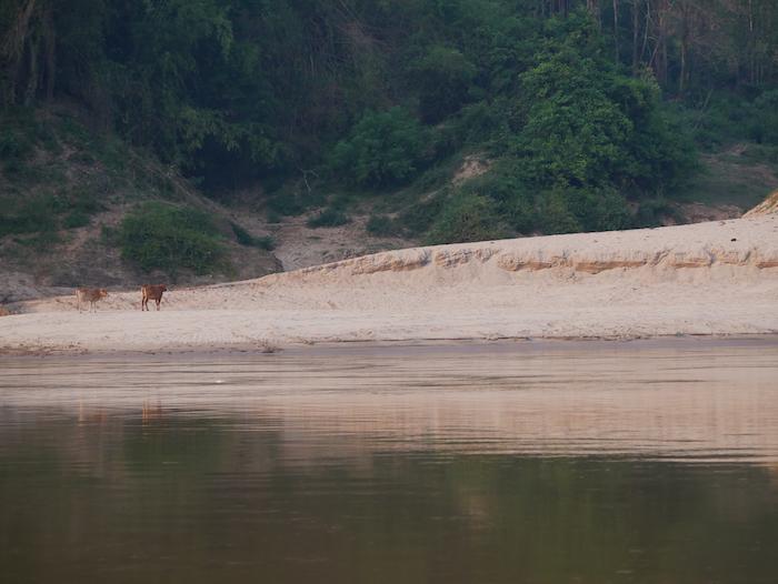 Quels animaux rencontre-t-on sur le Mékong ?