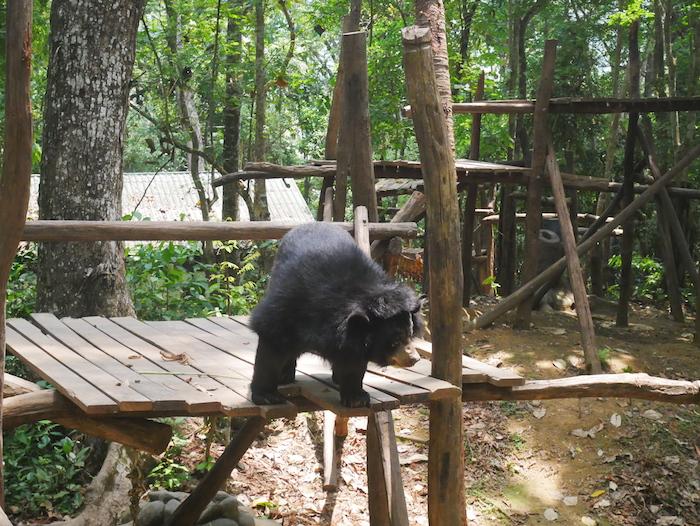 Où voir des ours au Laos ?
