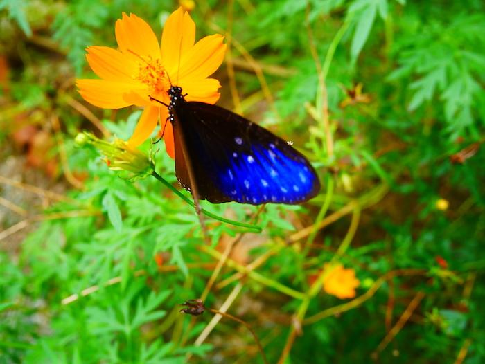 Où voir des papillons à Kampot ?