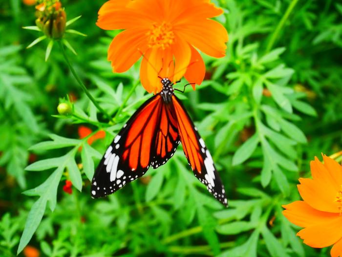 Où se trouve la ferme des papillons ?