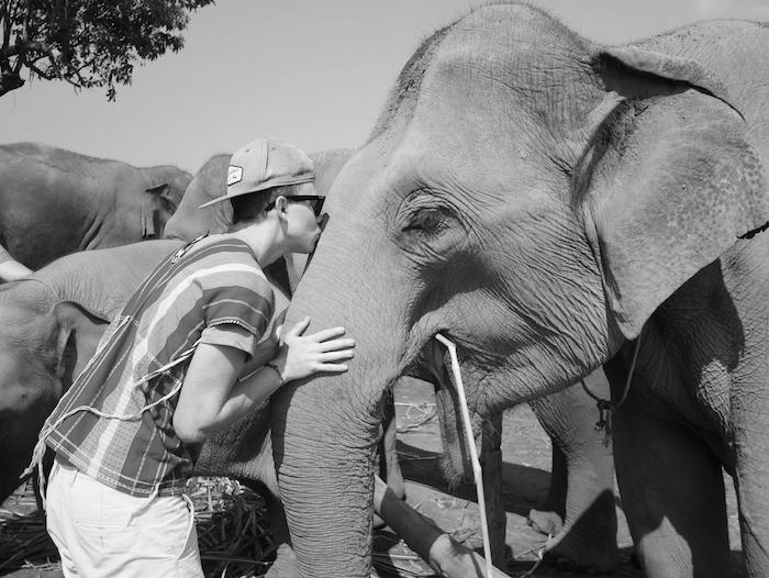 Où se trouve le Dumbo Elephant Spa ?
