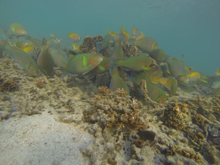 Où faire du snorkelling en Thaïlande ?