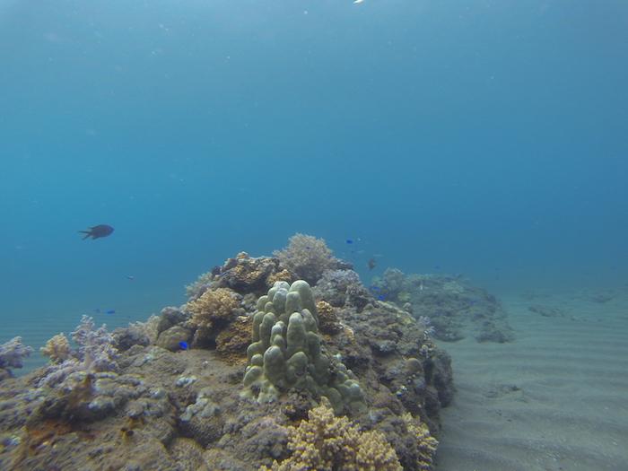 Où faire du snorkelling à Amed ?