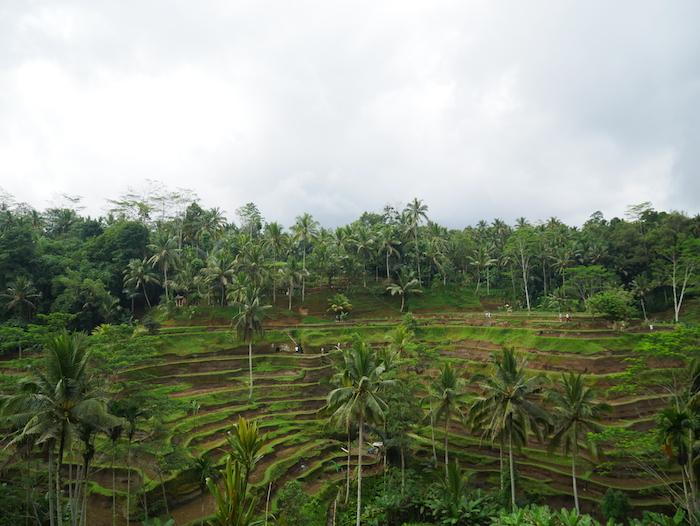 Quelles rizières visiter à Ubud ?