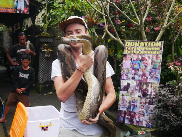 Où trouver des serpents à Amed ?