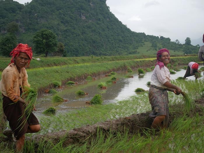 Quelle langue parle les birmans ?