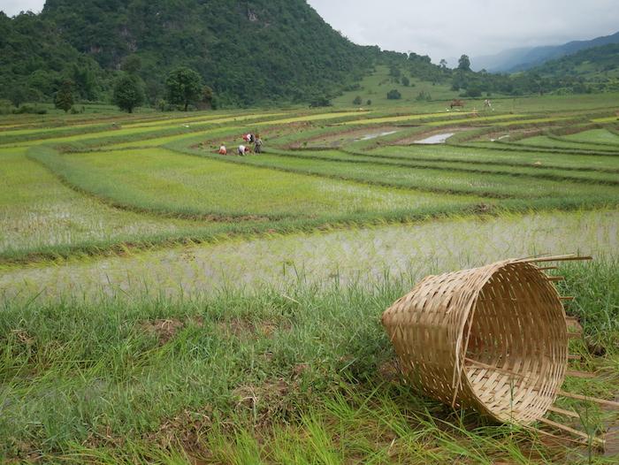 Que cultivent les habitants du Myanmar ?