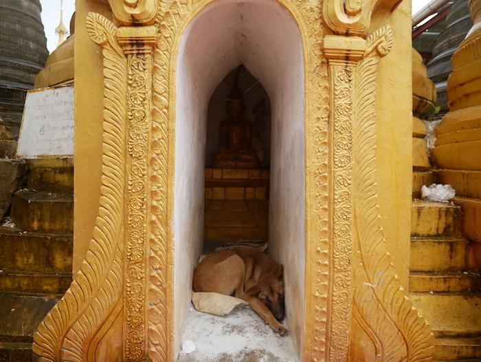 Les chiens errants sont très nombreux en Birmanie.