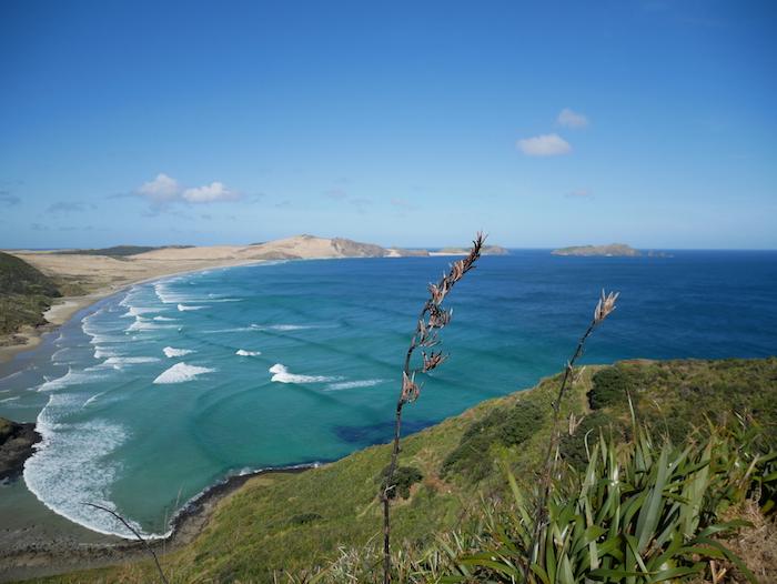 Pourquoi faire un road trip en Nouvelle-Zélande ?