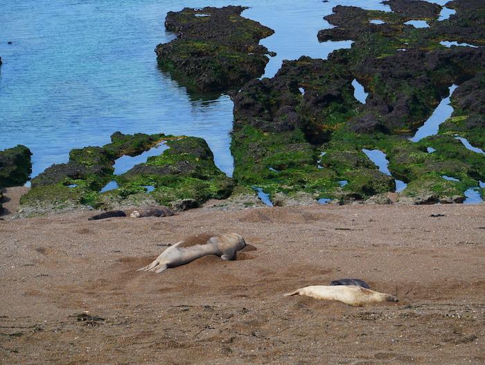 Où voir des phoques en Argentine ?
