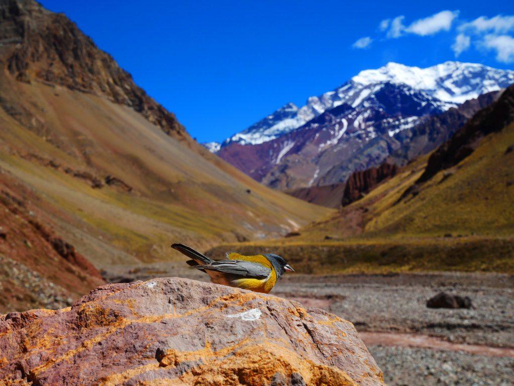 Quoi visiter à l'Aconcagua ?