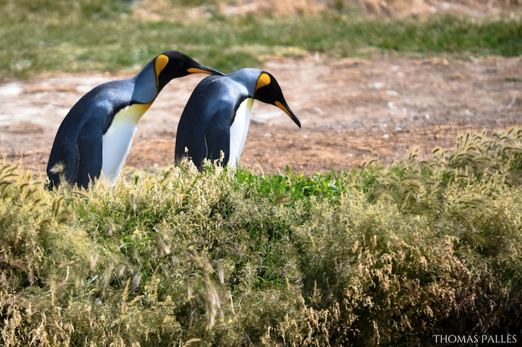 Que faire en Patagonie chilienne ?