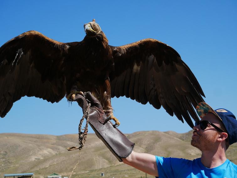 Combien pèse un aigle ?
