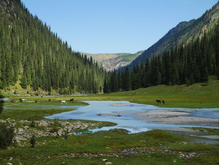La vallée à Karakol pour se rendre au lac Ala Kul est magnifique !