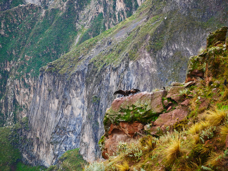 Cruz del Condor au Pérou.