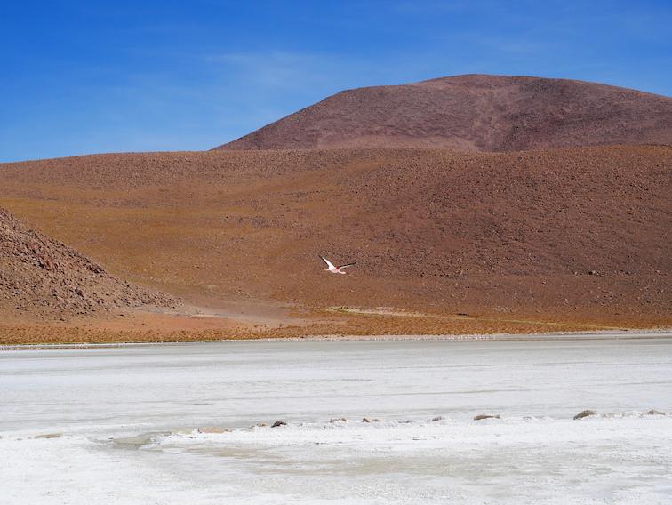 Lagune blanche de borax en Bolivie.