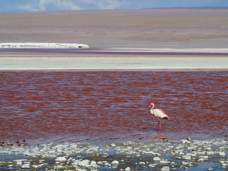 Laguna colorada et flamant en Bolivie.