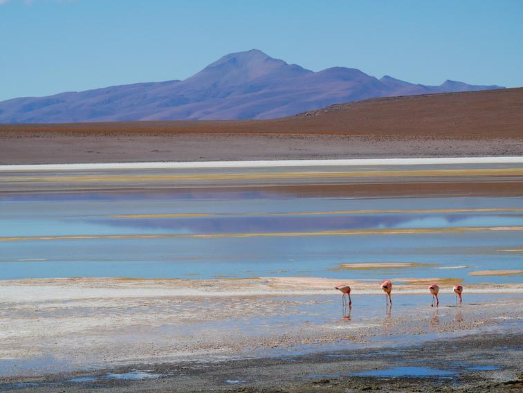 Une lagune bolivienne et des flamants.