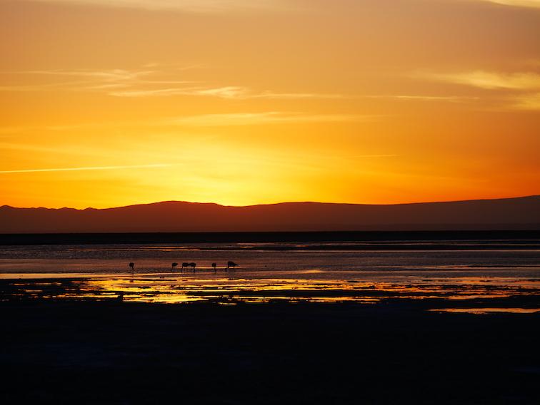 Un coucher de soleil à Chaxa.