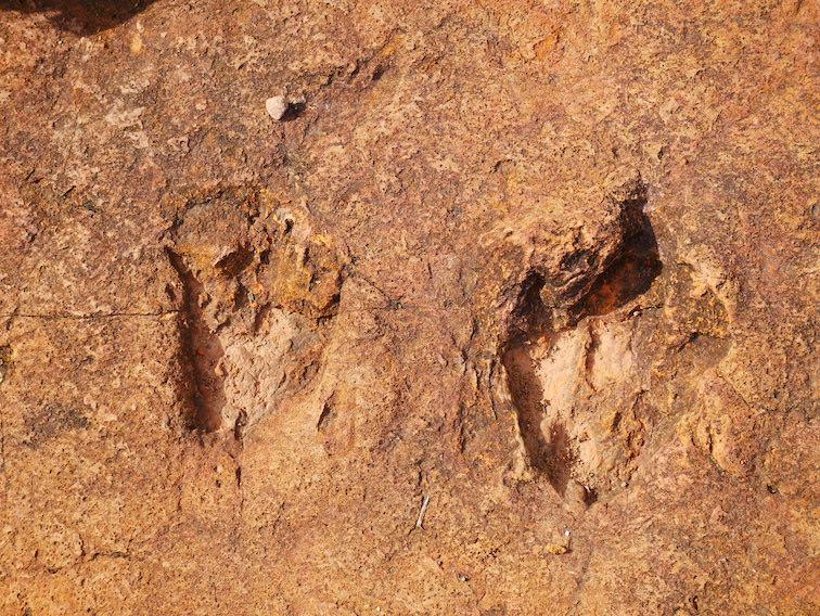Avez-vous vu des dinosaures à Torotoro ?