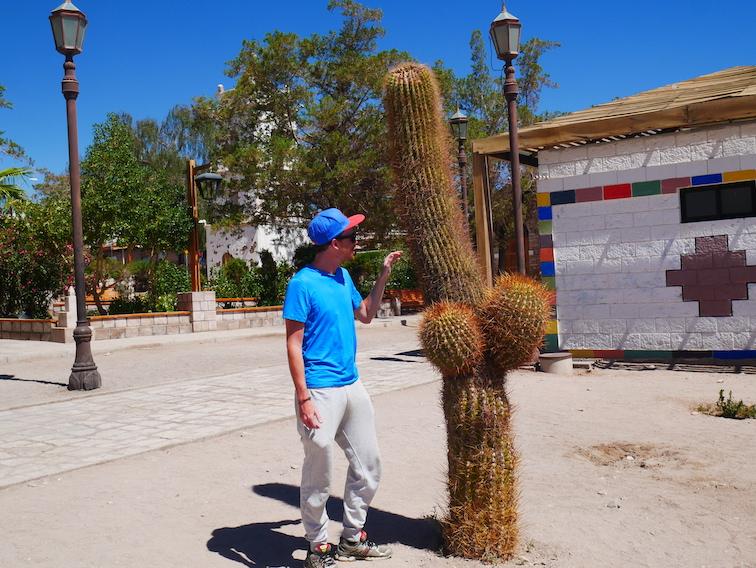 Un cactus au village de Toconao.