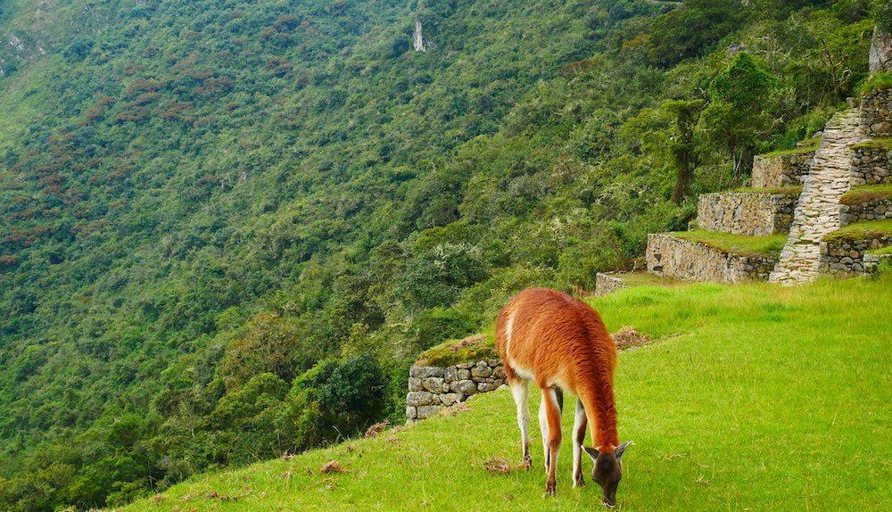 Comment organiser son séjour péruvien ?