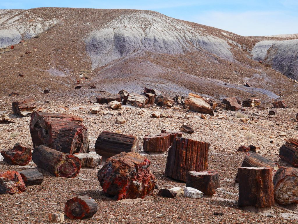 Pourquoi aller à Petrified Forest ?