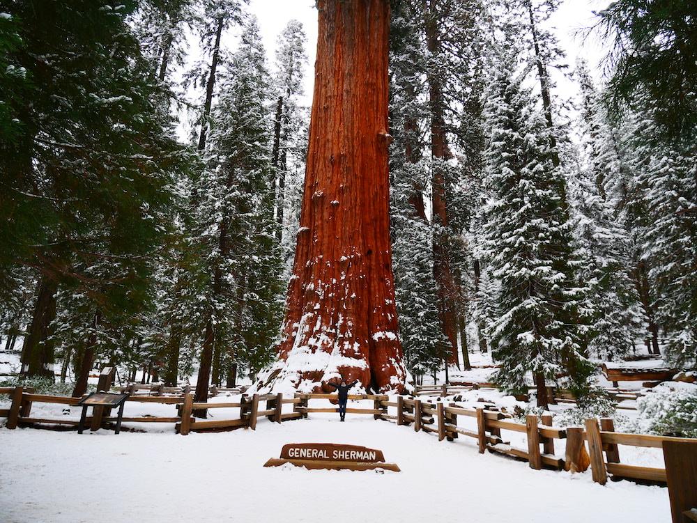 Le général Sherman se trouve à Sequoia Park.