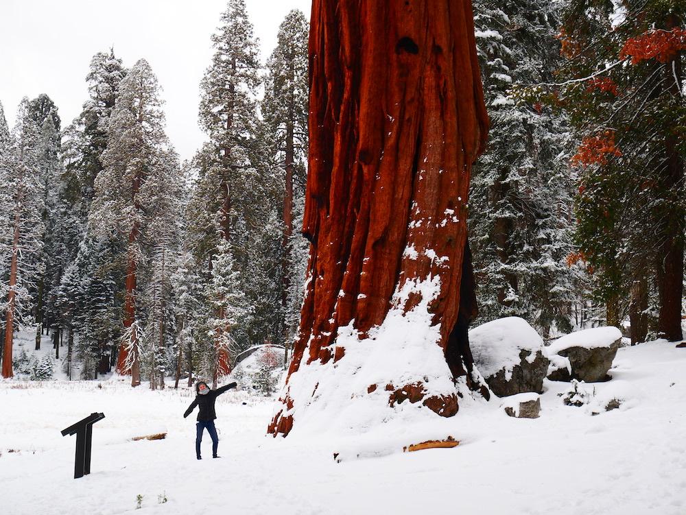 Quels parcs nationaux en Californie valent le coup ?
