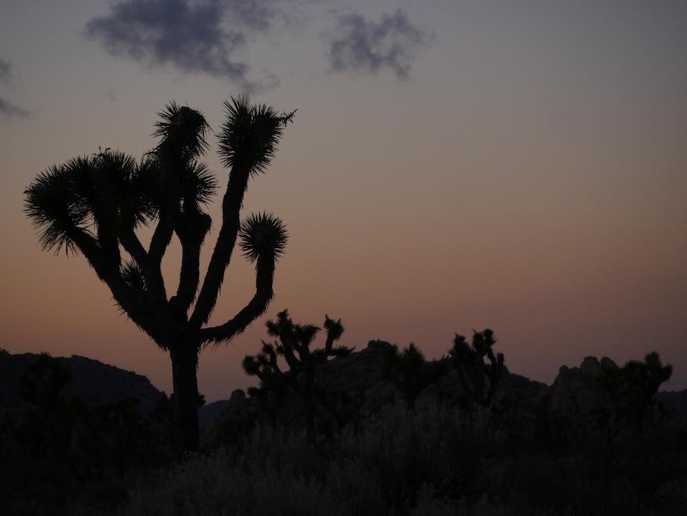 Quels sont les plus beaux parcs nationaux en Californie ?