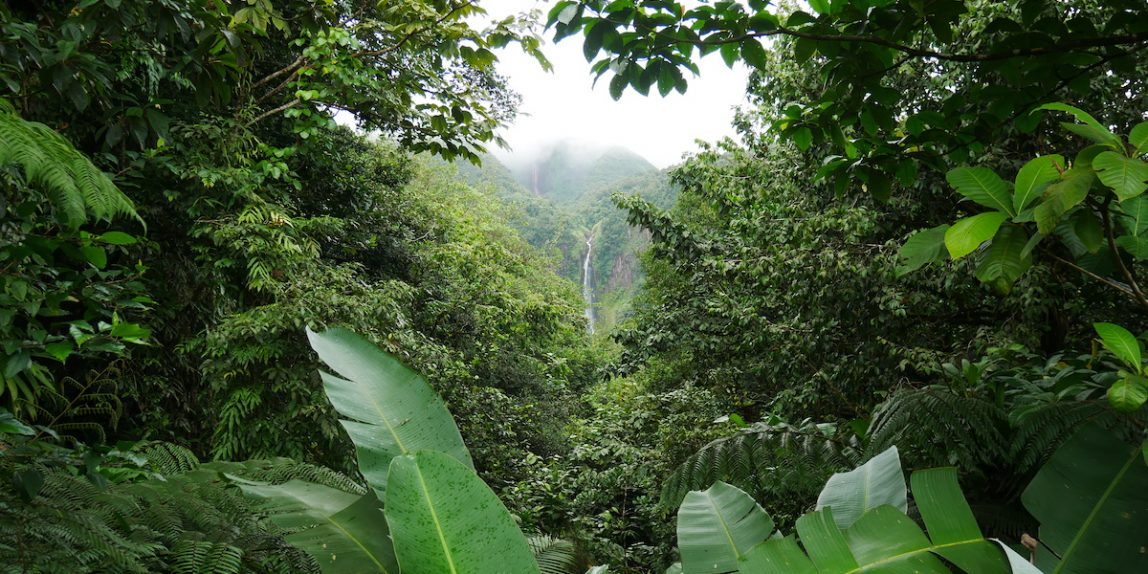 Que faire à Basse-Terre en Guadeloupe ?