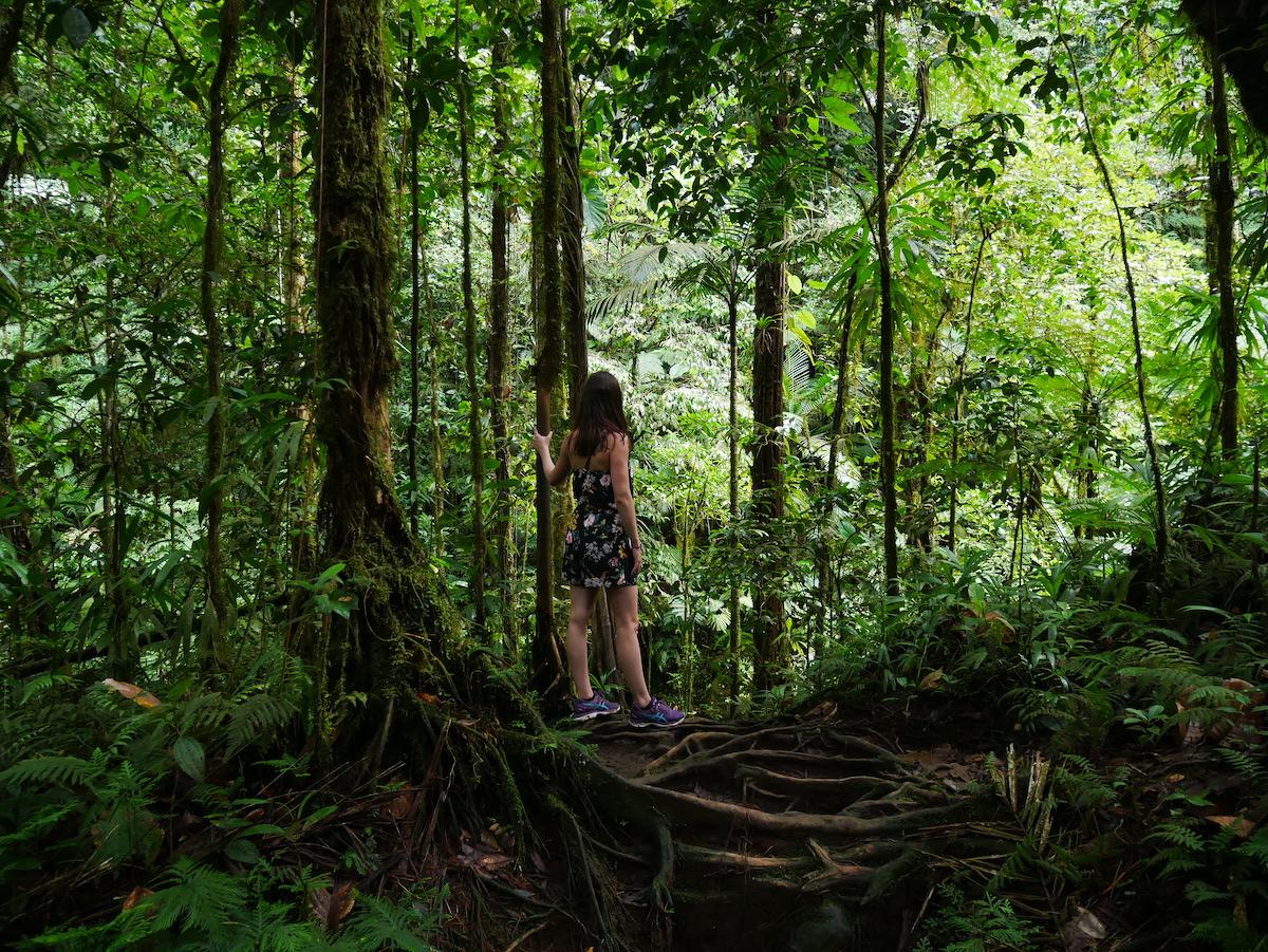 Où sont les cascades d'eau fraîche en Guadeloupe ?
