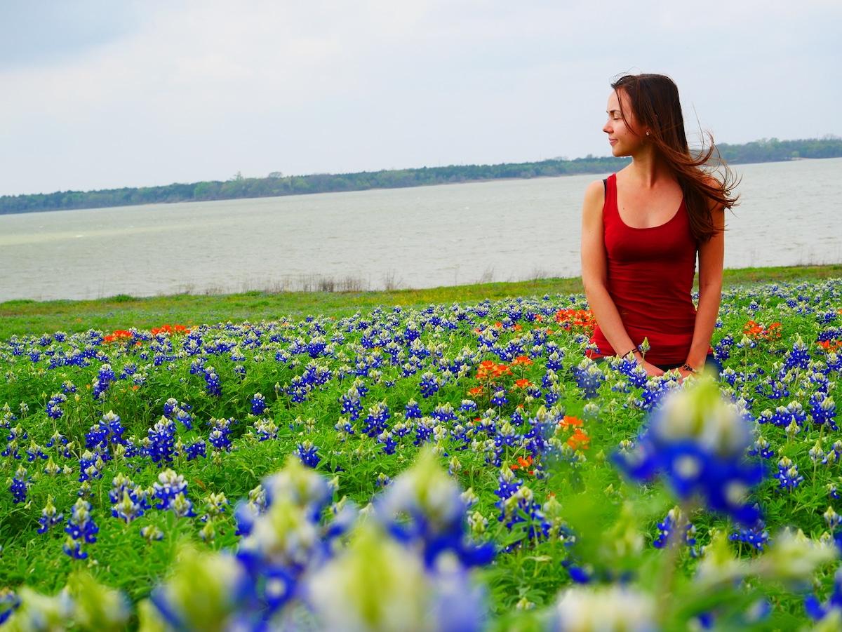 Les bluebonnets du Texas.