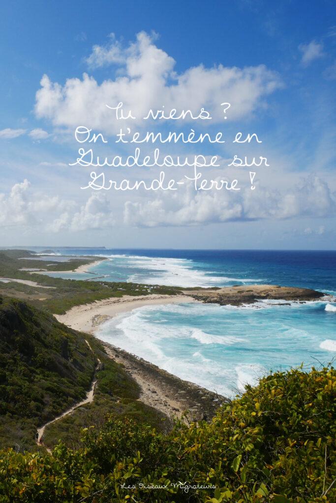 Suis les oiseaux migrateurs aussi sur Pinterest en Guadeloupe !