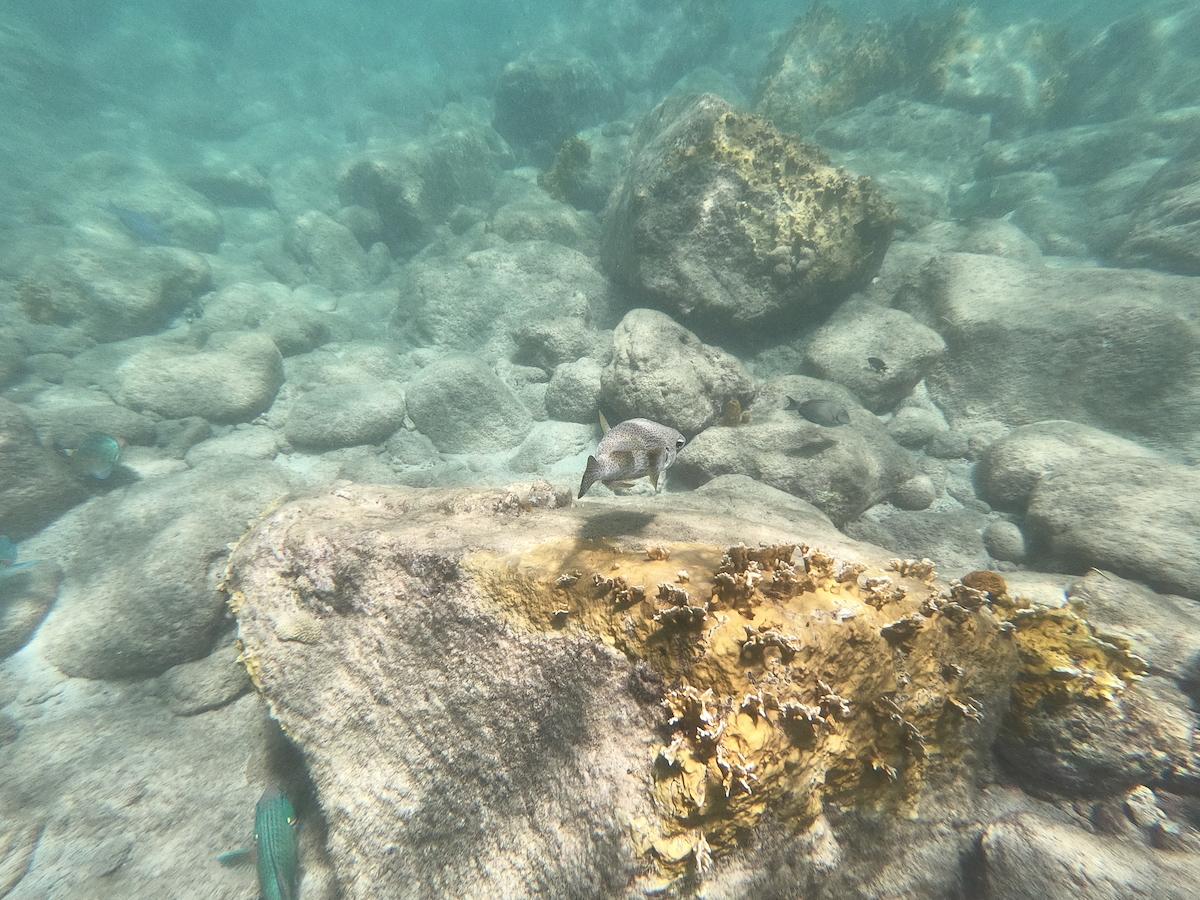 Où plonger en Guadeloupe ?