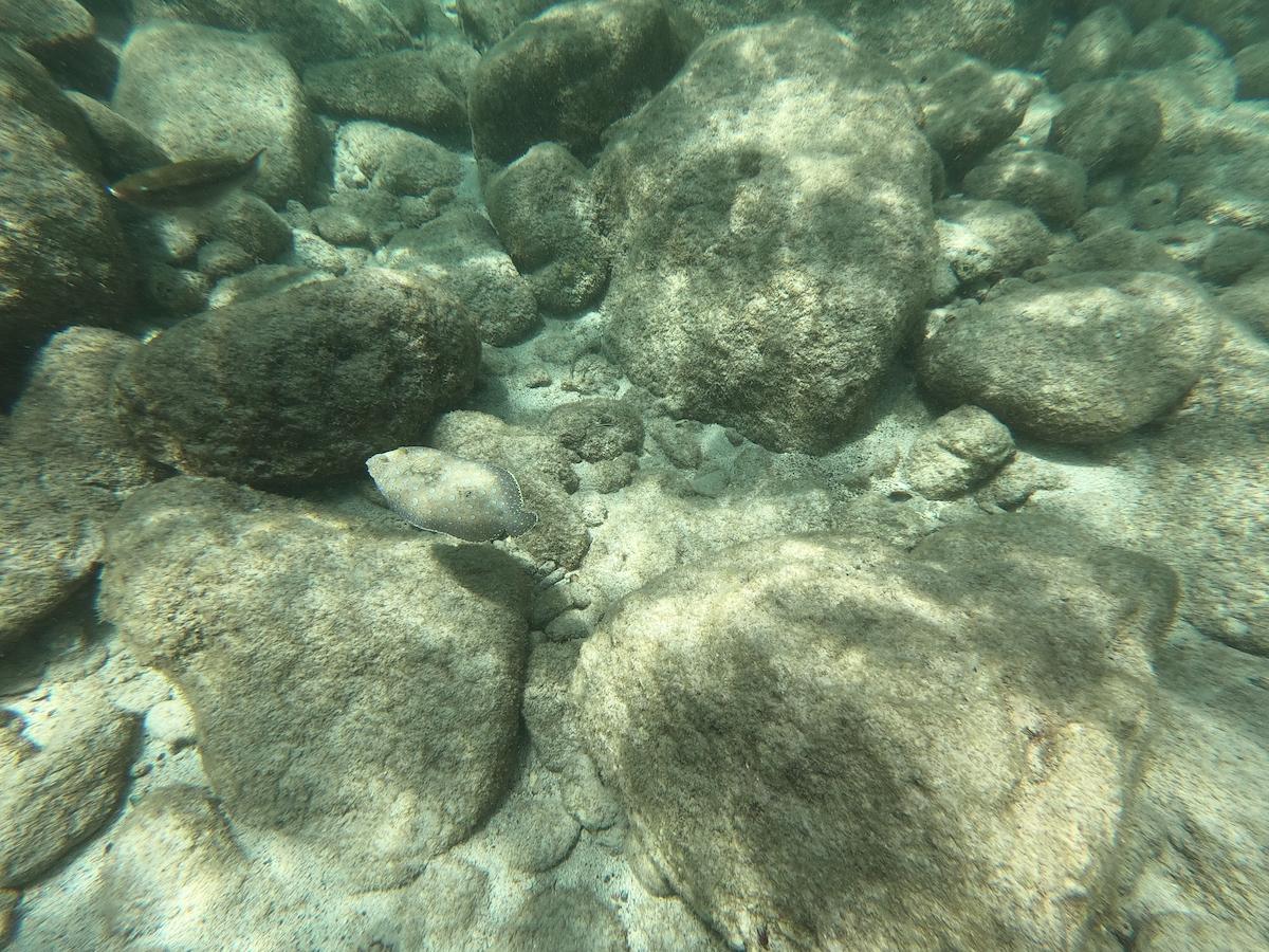 Y a-t-il des coraux en Guadeloupe ?