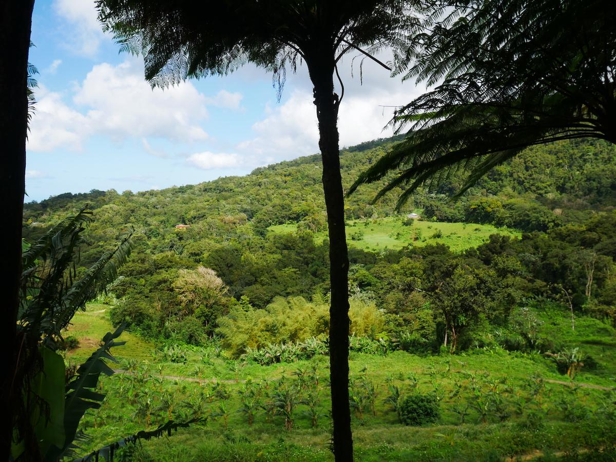 Quoi visiter à Basse-Terre ?